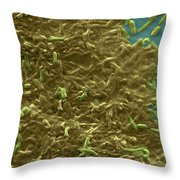Potable Water Biofilm Throw Pillow by Science Source