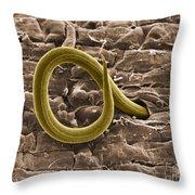 Root Knot Nematode Sem Throw Pillow
