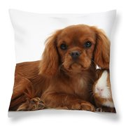 Ruby Cavalier King Charles Spaniel Pup Throw Pillow