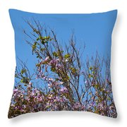 Saucer Magnolia Or Tulip Tree Magnolia X Soulangeana Throw Pillow