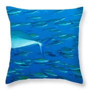 School Of Wide-band Fusilier Fish Throw Pillow