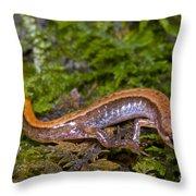 Seepage Salamander Throw Pillow