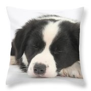 Sleepy Puppy Throw Pillow