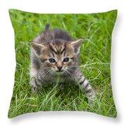 Small Kitten In The Grass Throw Pillow