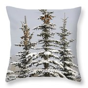 Snow Covered Evergreen Trees Calgary Throw Pillow