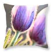 Spring Time Crocus Flower Throw Pillow