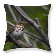 Swainsons Thrush Throw Pillow