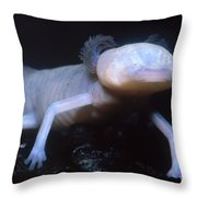Texas Blind Salamander Eurycea Rathbuni Throw Pillow