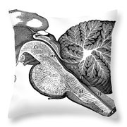 Third And Fourth Ventricles Of The Brain Throw Pillow