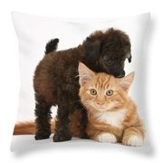 Toy Poodle Puppy With Kitten Throw Pillow