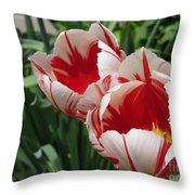 Triumph Tulip Named Carnaval De Rio Throw Pillow