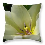 Tulip Named Perles De Printemp Throw Pillow
