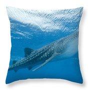 Whale Shark, Ari And Male Atoll Throw Pillow