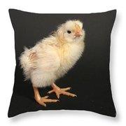 White Leghorn Chick Throw Pillow