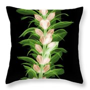 X-ray Of An Acanthus Flower Throw Pillow