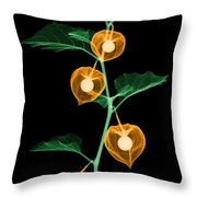 X-ray Of Chinese Lantern Plant Throw Pillow