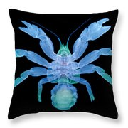 X-ray Of Coconut Crab Throw Pillow