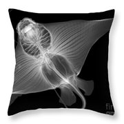 X-ray Of Cownose Ray Throw Pillow