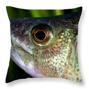 Yellow Perch Perca Flavescens Throw Pillow by Ted Kinsman