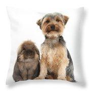 Yorkshire Terrier Dog Throw Pillow