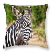Zebras In The Masai Mara Throw Pillow
