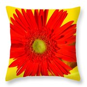 2024a1-001 Throw Pillow
