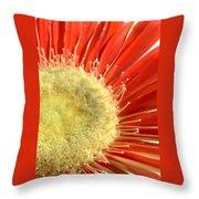 2049a1-004 Throw Pillow