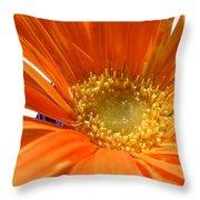 2106zc-002 Throw Pillow