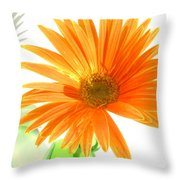 2107c-001 Throw Pillow