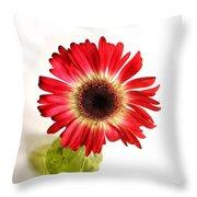 2193c1pn Throw Pillow