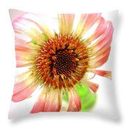 2269c-001 Throw Pillow