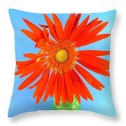 2279c2-001 Throw Pillow