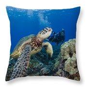 Green Sea Turtle Throw Pillow