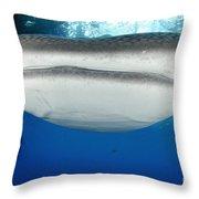 Whale Shark Feeding Under Fishing Throw Pillow