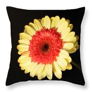 2973 Throw Pillow