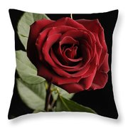 A Red Rose Rosaceae Throw Pillow