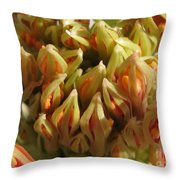 African Blood Lily Or Fireball Lily Throw Pillow