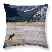 American Elk Cervus Elaphus Nelsoni Throw Pillow