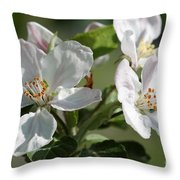 Apple Blossom Throw Pillow