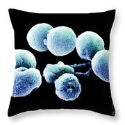 Bacteria, Streptococcus Pneumoniae, Sem Throw Pillow
