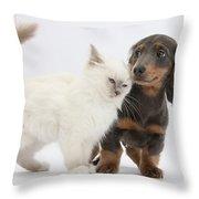 Blue-point Kitten & Dachshund Throw Pillow