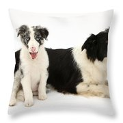 Border Collies Throw Pillow