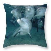 Bottlenose Dolphin Underwater Pair Throw Pillow