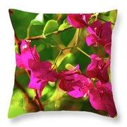 3- Bougainvillea Throw Pillow