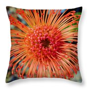 Common Pincushion Protea Throw Pillow