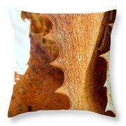 Dry Brown Aloe Vera Leaf Throw Pillow