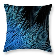 Eastern Bluebird Feathers Throw Pillow