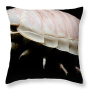 Giant Marine Isopod Throw Pillow