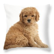 Goldendoodle Puppy Throw Pillow