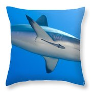 Gray Reef Shark With Remora, Papua New Throw Pillow